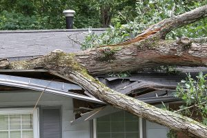 Storm Damage: What To Do